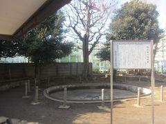 その手前には猿楽古代住居跡 説明がなければ池か何かと思ってしまいますが、これが古代住居跡なんだそう マンション予定地だったこの場所を渋谷区が買い上げて公園にしたようです
