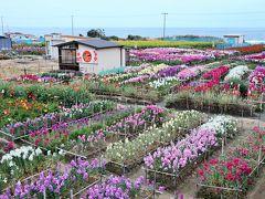 白間津お花畑