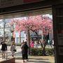 駅の西側(=下田行き方面)の出口に進むと満開の河津桜と派手なピンクのハッピ&帽子を着たガイドが歓迎してくれた (9:11)  レトロな郵便ポストもあった