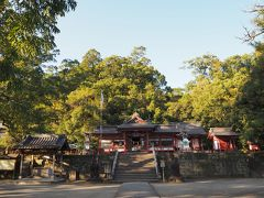 蒲生八幡神社の境内にその巨木はあります