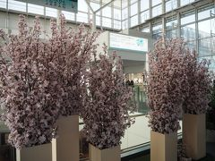 国際線ターミナルでは桜がお出迎え。 でも造花でした(^_^;)