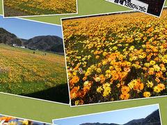 そして何とか目的地に到着出来ました。(笑) 初めて来ましたが、かなり広い花畑でビックリしました。