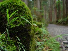 並木の間には随所に点在する苔蒸した石垣。かつて霊山と崇められていた頃の院坊跡の礎石に、当時は多くの修験者が訪れたろうと伺い知れた。
