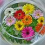 春から秋の季節に綺麗に咲いているガーベラ(Gerbera)
