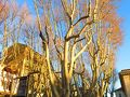 今日は、エーグ=モルト Aigues-Mortes に行く予定だけど、 列車の時間まで、アヴィニョン旧市街を徘徊 レピュブリック通りに朝日が差してきた。