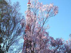 東京タワーと桜です