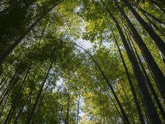 報国寺 美しい竹林で有名な報国寺。 竹林拝観料は200円、茶席で抹茶・菓子をいただける席料込みだとプラス500円です。