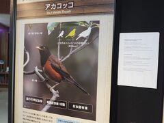 雨がひどくなってきたので、アカコッコ館にきました。三宅島はバードウォッチングが有名で、野鳥に関する展示がたくさんありました。野鳥の会の方が常駐していて、説明してもらえました。
