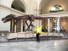 フィールド博物館です。 かなり広く、とても全部は見きれませんでしたが、ワクワクしながら見学しました。  写真は恐らく最も有名な恐竜の化石。 「スー」と名付けられた女の子です。