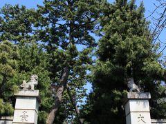 豪徳寺の門柱の先に松林の参道。その先に山門があります。