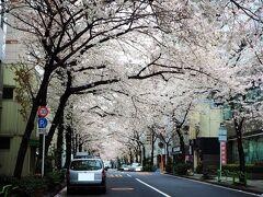 茅場町駅近くで母・姪と合流しました。 じゃあのんびり行きますか~  日本橋のさくら通りに到着。わぁ! キレイ! 花曇りのお天気が少し残念ですが、それでもキレイです!  8~9分咲きかな? まだあまり花びらは舞っていません。ここは花びらが散るころ(満開を過ぎたあたり)が個人的にはおすすめです。花びらの風に包まれる感じが味わえますよ!