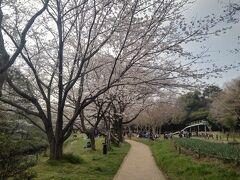 泉の森公園は神奈川県大和市の中央部にある引地川源流部周辺の緑地。引地川は我が家の脇を流れる境川とずっと平行に流れていて、鵠沼海岸で湘南の海に注ぐ。  今日は大和駅側、すなわち下流側から登っていこう。