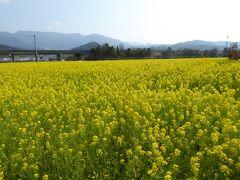 東温市見奈良1125 「レスパス・シティ・クールスモール」を目指しました。  大規模施設なので駐車場も広いです(無料) その施設の裏に菜の花畑が広がります