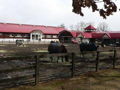 着いた所はノーザンホースパーク  乗馬ができるのですが、とにかく風が冷たい! 今はオフシーズンですね(^^;)  イベントは暖かくなってからです。