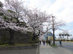 最高裁判所の前を通りましたが、この季節はどこも桜が咲いています。