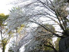 中雀門と桜