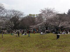 砧公園はかなり広い。向こうの桜の木のたもとでお弁当を広げているご家族もいましたが、どうも写真でよく見る場所ではなさそう。もう少し探して奥へ。