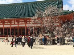 有名な右近の桜。いや、左近の桜だっけ??どっちにしても2部咲きです(^^;) 神苑入苑はどうやろ?って思ったら、ここは入場料いるようなんで退散。 出てくる人によると、中もまだまだって(^^;)