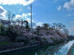 ホテルまで 徒歩15分 稲荷駅の裏の桜が 5分咲き