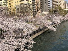 大川沿いは桜の川になります。 この時期は圧巻です。源八橋から北側環状線方向に向かって写しています。