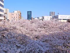 中目黒駅のホームから目黒川の満開の桜並木が見られます。