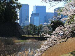蓮池濠と桜。背後は大手町のビル群。