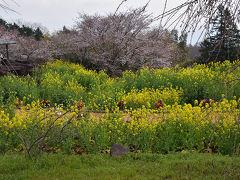 タクシーで山の農道を駆け上がること7~8分、一夜城Yoroizuka Farmへ到着。 開会20分前、すぐさま行列に並びました。