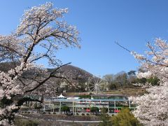 ではでは 桐生が岡動物園へ! 桜に囲まれた遊園地もイイですね
