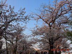 まずは明るい時間の桜を見る。  隅田公園内はお花見の人で混雑してます。