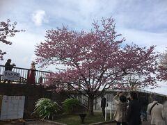 隅田川沿いまで歩いて来ました。