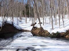 私の大好きな雪の「美人林」に到着。長いブーツに履き替え、道のない雪の上を歩いてたどり着きました。