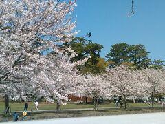 前日の駿府城公園(葵区)