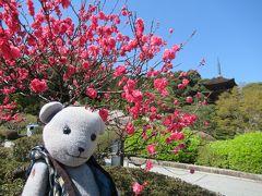 4月4日の香山公園。 例年ソメイヨシノがピークになる頃に咲くハナモモが今年は早めに咲いたようで、近づいたらちょっとピークが過ぎた感がありましたが、きれいだし目立つので、大勢の観光客さんに喜ばれておりました。