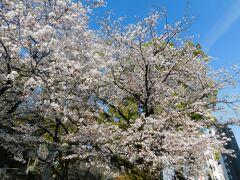 2019.04.06 熊本 熊本駅近くの北岡神社の桜は満開だ。令和の世も変わらず桜は咲き続けるが、鉄道車両はいつか花と散る。平成の世に生を受け、平成の世に惜しくも花と散った車両たち(と当時の旅行記)を桜の代わりにめでながら、令和の世を迎えたいと思う。