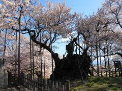 朝8時前に、山高神代桜のある実相寺に到着です。