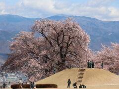 10時前に八代ふるさと公園に到着です。 まずは、盃塚古墳(園墳)と、そばにある甲州蚕影桜(こうしゅうこかげざくら)を眺めます。
