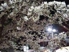 おまけ。 湯田温泉祭りの時の井上公園の夜桜。 クマは持ってるのにカメラを忘れるというボケをかまして、スマホ撮りだったのでした。