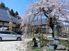 萬休院に到着。本堂前には枝垂れ桜と、金色の仏像。