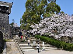 高石垣の横の石段を上り、さらに中心部へ。 石垣と桜、どっちも気になってしまい集中できん。。。