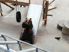自由時間を利用して熊牧場に行ってきました。  餌としてクッキーとリンゴを売っていますが、添乗員さんのおススメはリンゴ。 喜んで食べるそうです。  ボス格?の熊がちょうだい!ちょうだい!とアピールしていました。