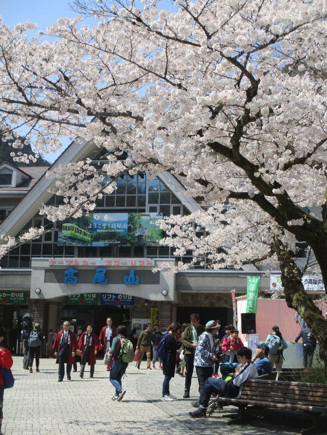 「高尾山 桜」の画像検索結果