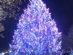 ミレニアムパークのツリーも綺麗です。