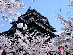 本丸跡にもたくさんの桜が植えられており、この時期はお城&桜の鉄板コラボが楽しめます(*^^*)