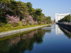 ●城山公園@南堀端  奥に見えるのは、松山市役所。 この辺りの風景も、僕の大好きな松山の景色。