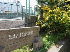 そのまま直ぐ近くの赤羽緑道公園に入る。 入り口には山吹の花が咲いている。