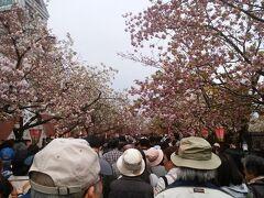 造幣局の桜の通り抜けは南側から北側への一方通行。人が多く、こんな感じで見学するので、逆走はそもそも無理に近いです。