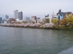大阪では桜が満開なこと、造幣局の桜の通り抜けの期間なこと、週末から天気が崩れること、そして何より偶然にも日中1時間ほど時間ができたことなど、諸々の状況を踏まえると、ここは行くしかないなと思い、初めて参加することに。 写真は、天満橋から見た南天満公園の桜並木。満開です。
