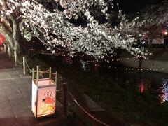 2019.04.05  五条川 堀尾跡公園