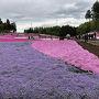 西武秩父線・横瀬駅から歩いて羊山の芝桜の丘に到着。 歩いている間は曇り空だったが芝桜の丘に着いて暫くしたら小雨が降ってきました...