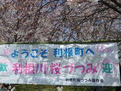 桜づつみを観にいきました。 観光の目玉になるように、町民で植えたそうです。